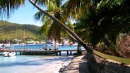 Palm trees of Bequia